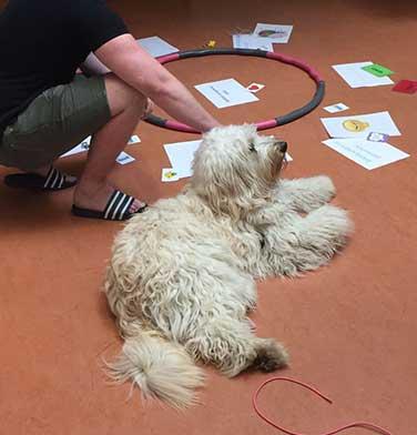coaching-met-honden-376-x-392-